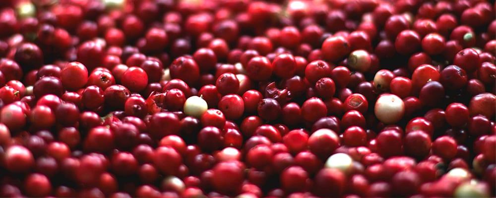 Cranberry Cinnamon Kombucha