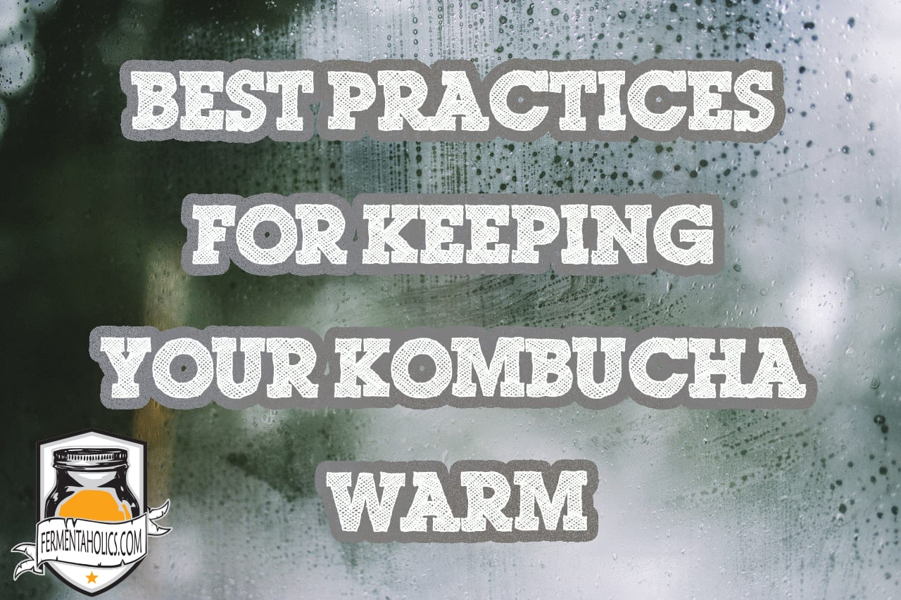 Best Practices For Keeping Your Kombucha Warm