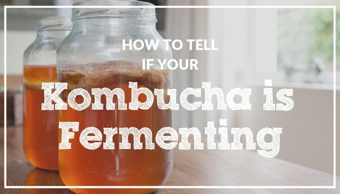 How to tell if your kombucha is fermenting?