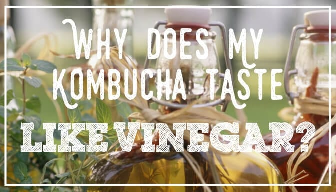 Kombucha Taste Like Vinegar