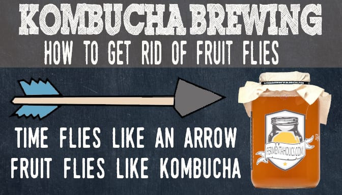 Kombucha Time Flies Like an Arrow Fruit Flies Like Kombucha
