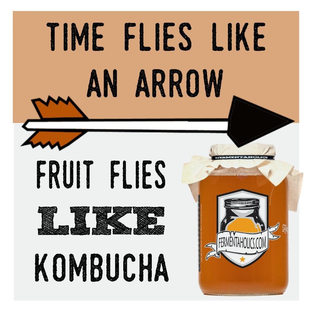 Kombucha Fruit Flies