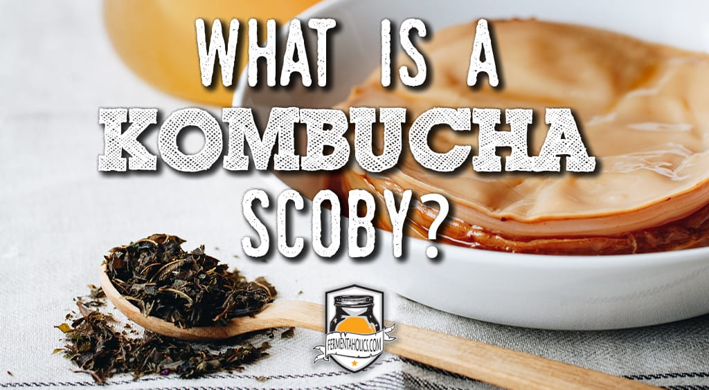 What is a Kombucha Scoby